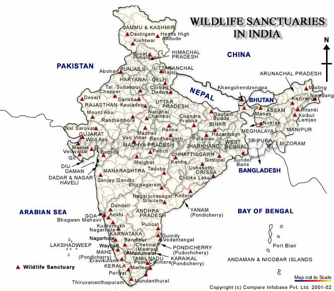 wildlife sanctuaries in india There are more than 540 wildlife sanctuaries and 200 national parks around in india which include ranthambhore national park, wayanad wildlife sanctuary, gahirmatha turtle sanctuaries, bhitarkanika wildlife sanctuaries, sambhar lake wildlife sanctuaries, sultanpur bird sanctuaries, banbasa wildlife sanctuaries.