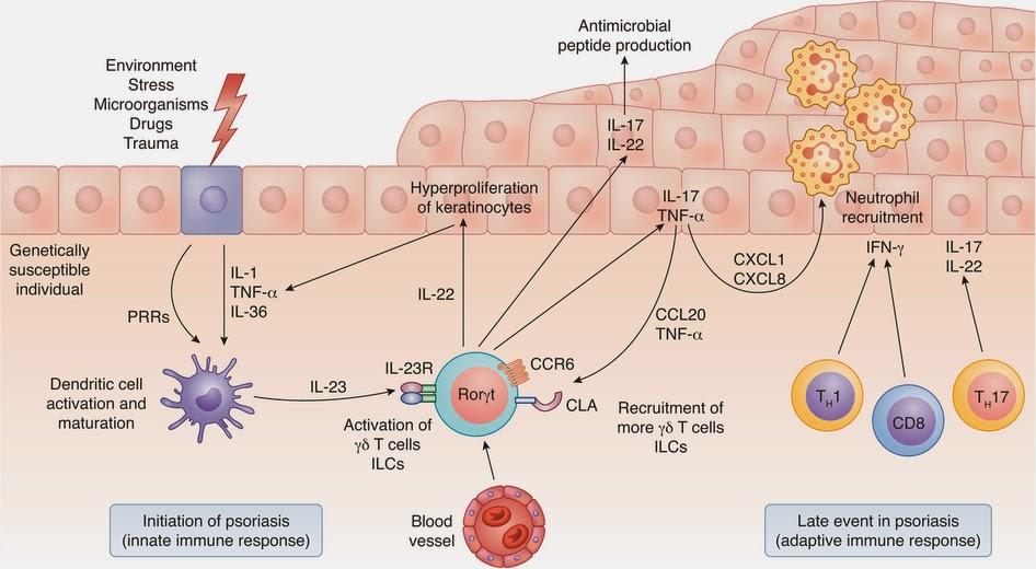 Como es curado después de la psoriasis