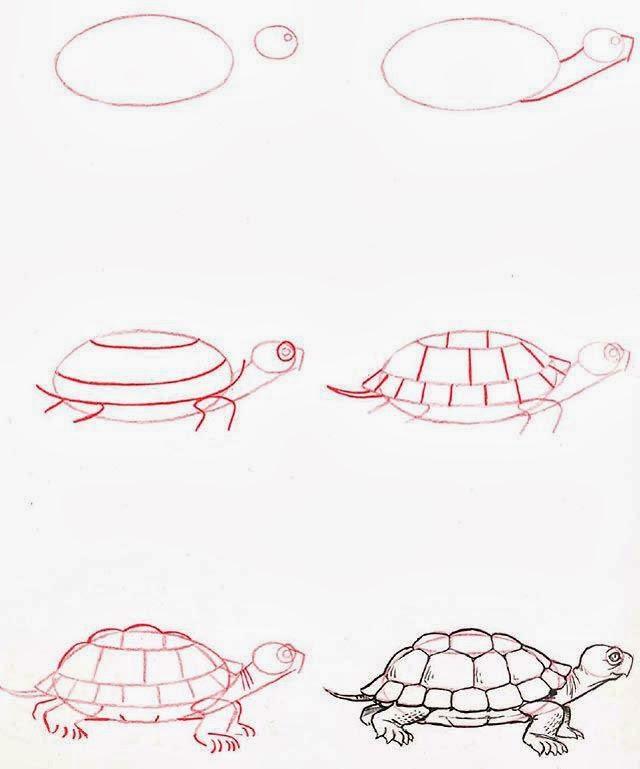 Le coin des enfants comment dessiner une tortue - Dessiner des animaux facilement ...