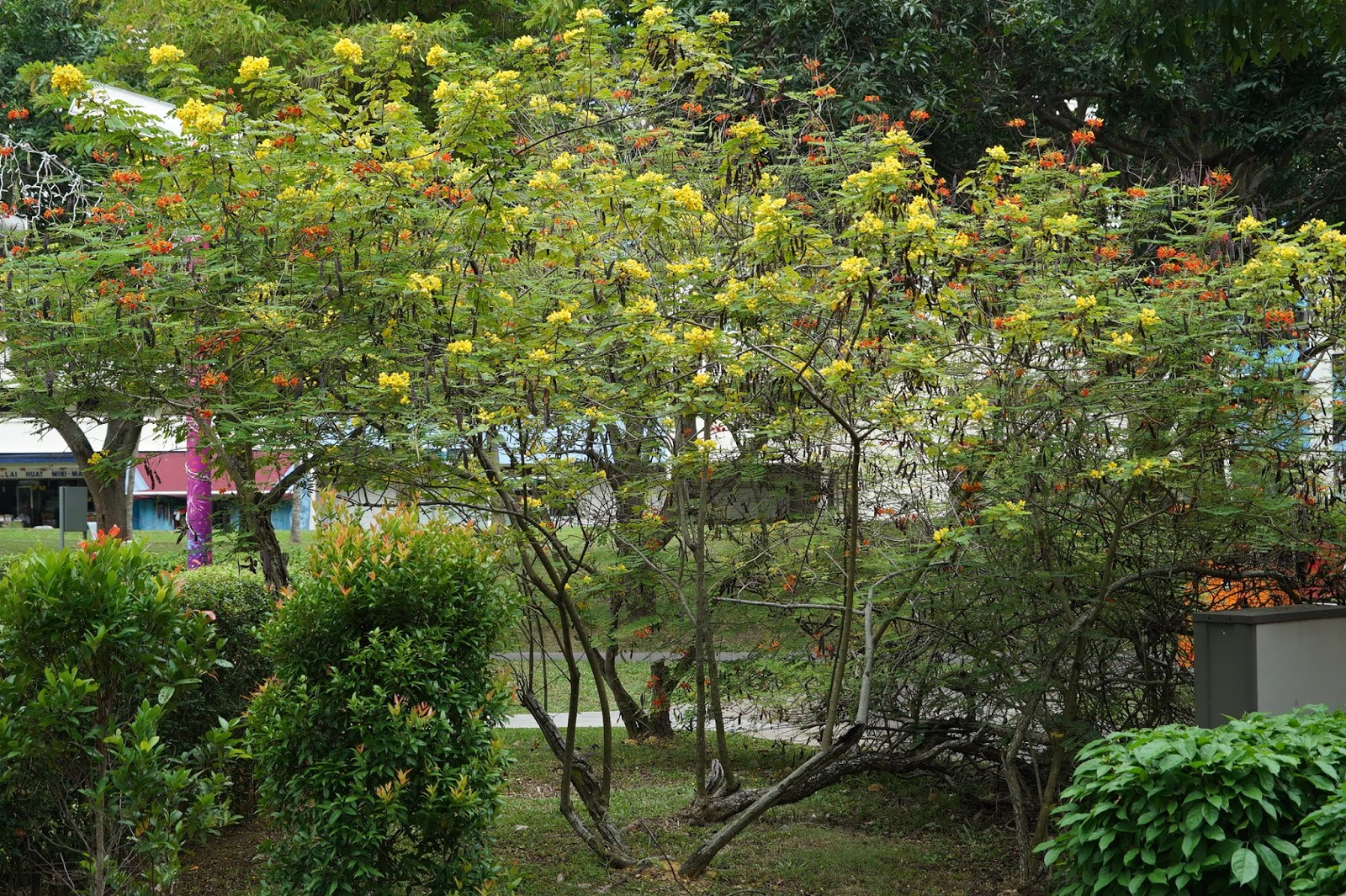 Common Trees And Plants In Singapore Source