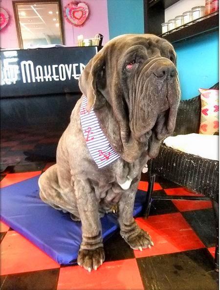 Big Dog grooming tamworth Birmingham