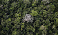An aerial view shows the Amazon rainforest at the Bom Futuro National Forest near Rio Pardo in Porto Velho, Rondonia State, Brazil, September 3, 2015. (Credit: Reuters/Nacho Doce) Click to Enlarge.