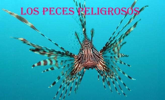 Cuaderno de pesca los peces peligrosos - Fotos de peces del mediterraneo ...