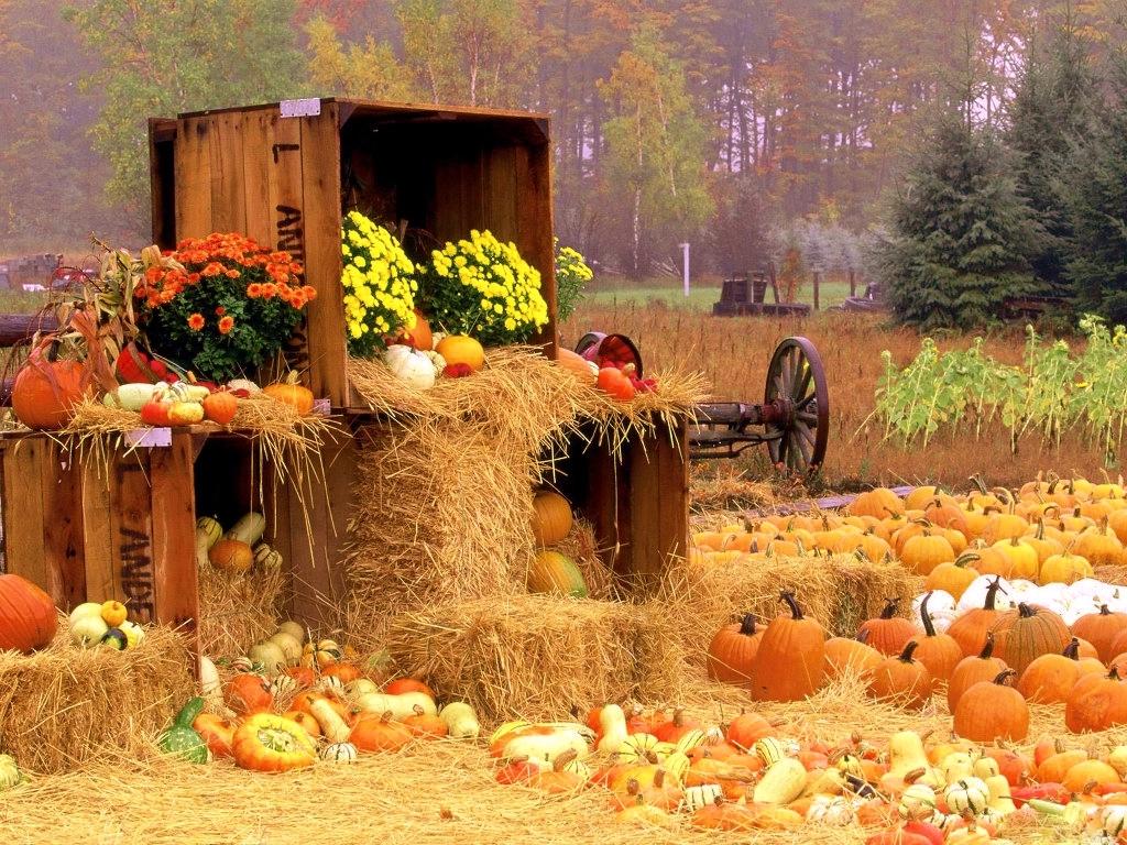 http://2.bp.blogspot.com/-LA38fJjbs3g/UHbsKBDaqYI/AAAAAAAAHUg/SQlYM1CNAyE/s1600/Happy+Halloween+Wallpaper+002.jpg