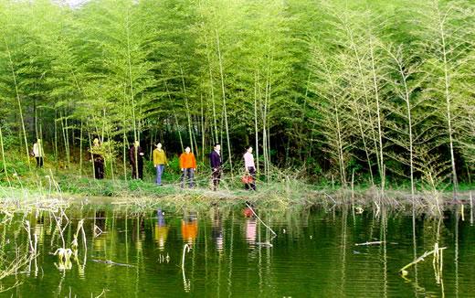 Bamboo Grove4