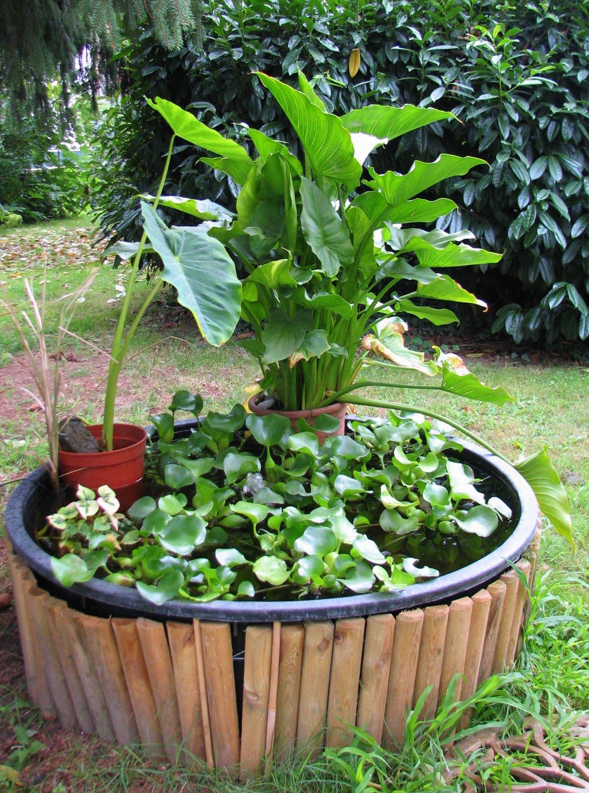 Un quadrato di giardino forum di giardinaggio un for Laghetto con ninfee