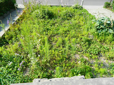 Bloordale garden cleanup before Paul Jung Gardening Services Toronto