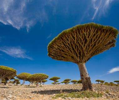 Best Buildings And Beautiful Places Of The World Socotra Archipelago Yemen Western Asia
