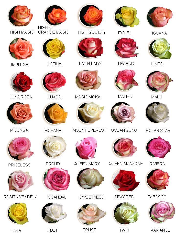 Tarım Siteniz: Gül Çeşitleri(Rose Types)