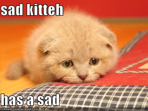 sad kitteh