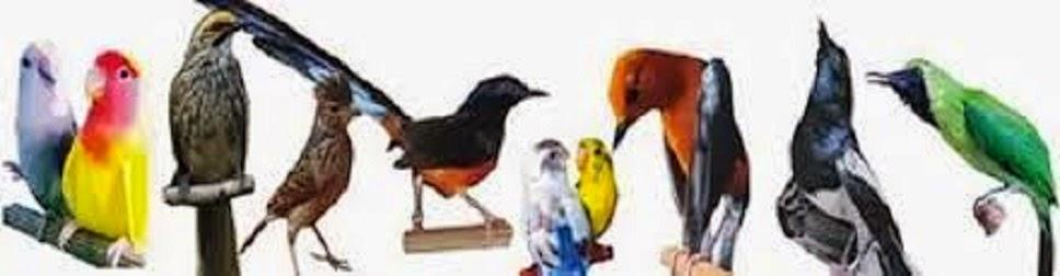 KC BIRD FARM