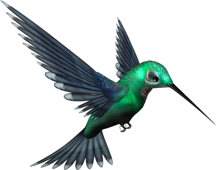 Green_Humming_Bird_PNG_by_pixievamp_stock.png
