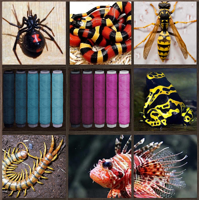animales venenosos, colores, peligro, rosa y azul, neurociencia visual