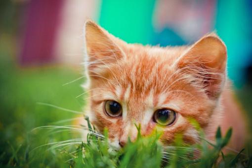 Jaki żwirek wybrać dla kota