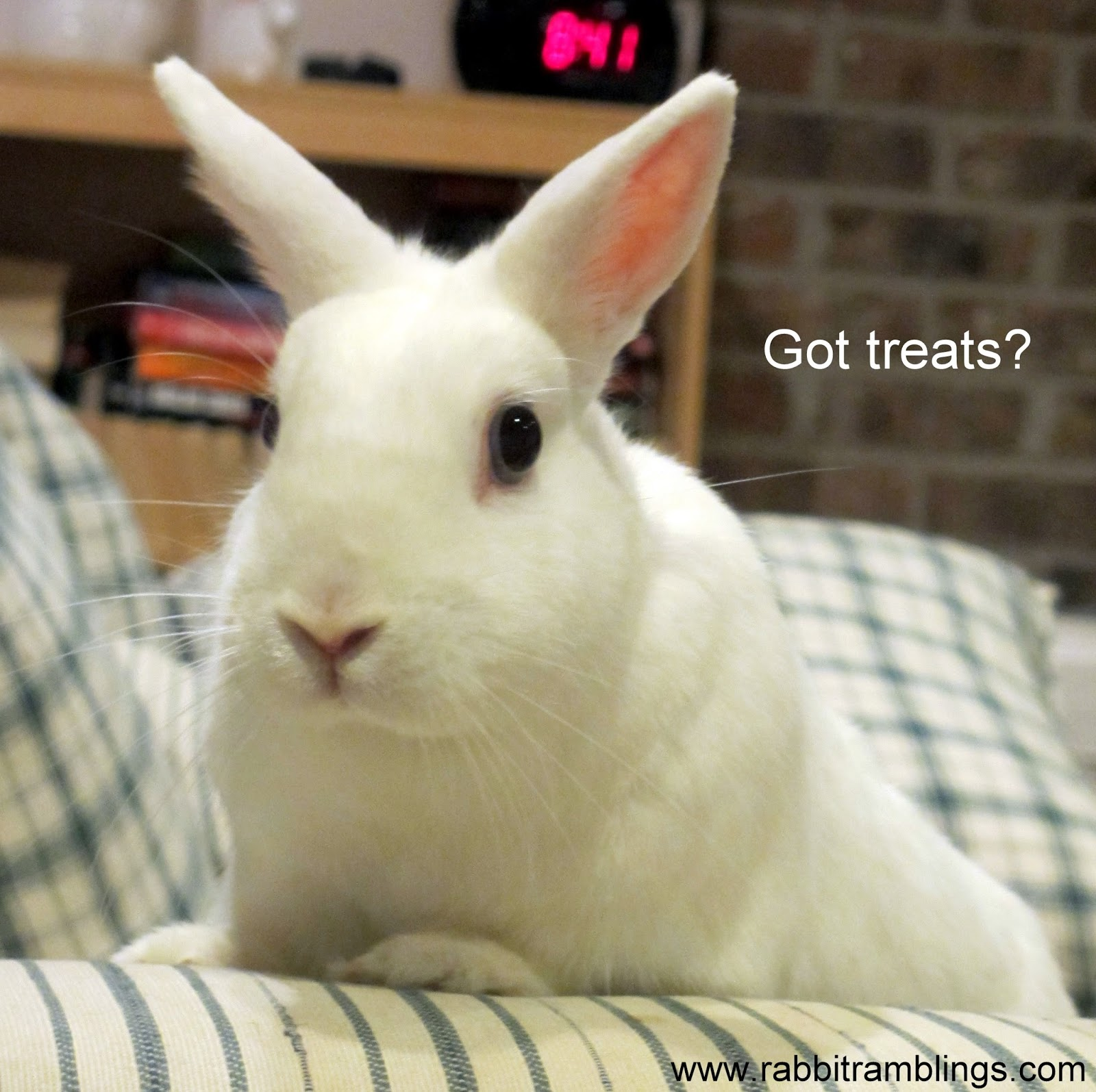 Funny rabbit funny rabbit pictures pictures of rabbits funny - Funny Rabbit Funny Rabbit Pictures Pictures Of Rabbits Funny 56
