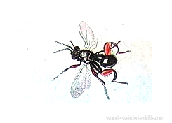 Bug Picture ::: Wonderweirded Vintage Animal Illustration