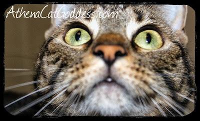 funny cat facial expression