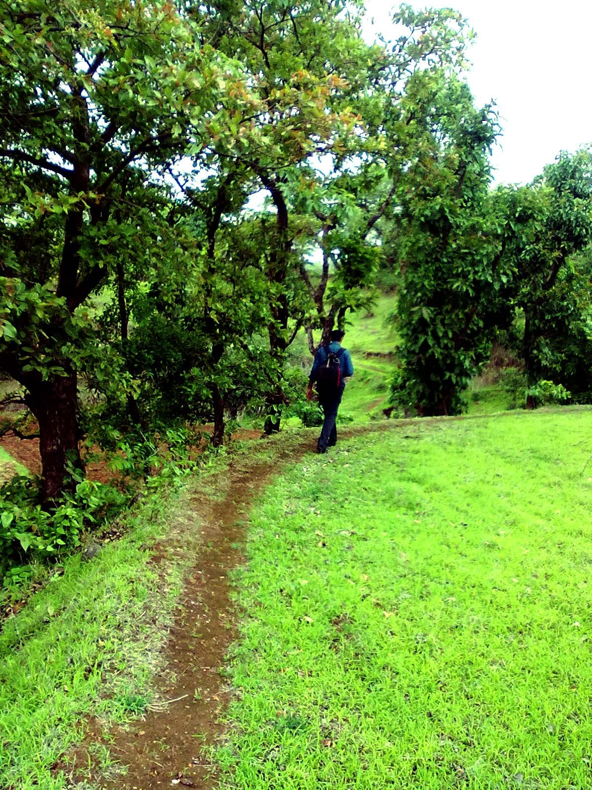 Greenery in Bhandardara
