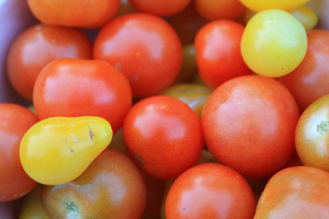 Pomodori a settembre