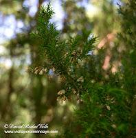 Moncayo AG-2 Itinerario Botánico sendero senderismo brezo
