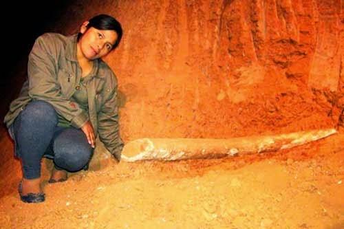 Hallan posible colmillo de mamut en Villamontes