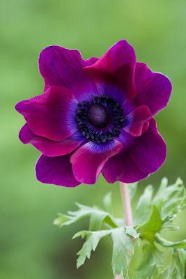 Fotos de plantas y flores hermosas Plantas facilisimo com - Ver Fotos De Las Flores Mas Hermosas Del Mundo