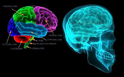 Cara Membuat Otak Kamu Berpikir Lebih Cepat