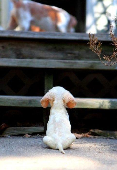 Funny dog pics - Buddy