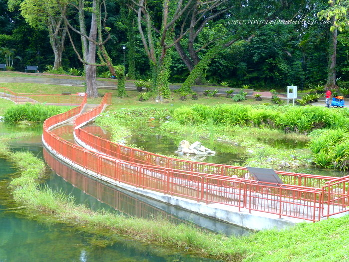 the submerged boardwalk at MacRitchie