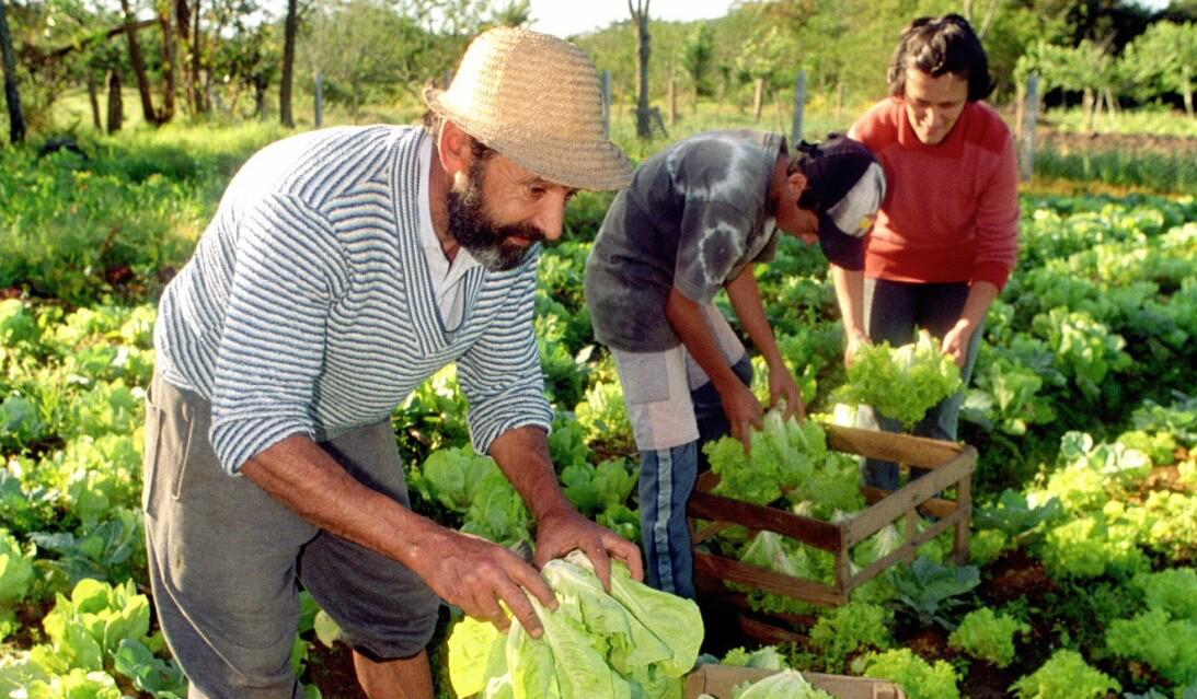 Isen o de icms fortalece agricultura familiar em mg for Planos mobiliario escolar peru