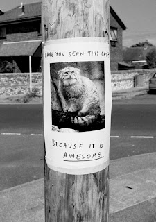 have you seen this cat because it is awesome