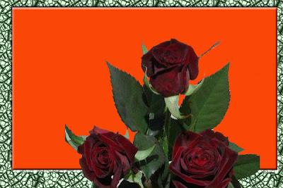 mawar_hitam_baccara
