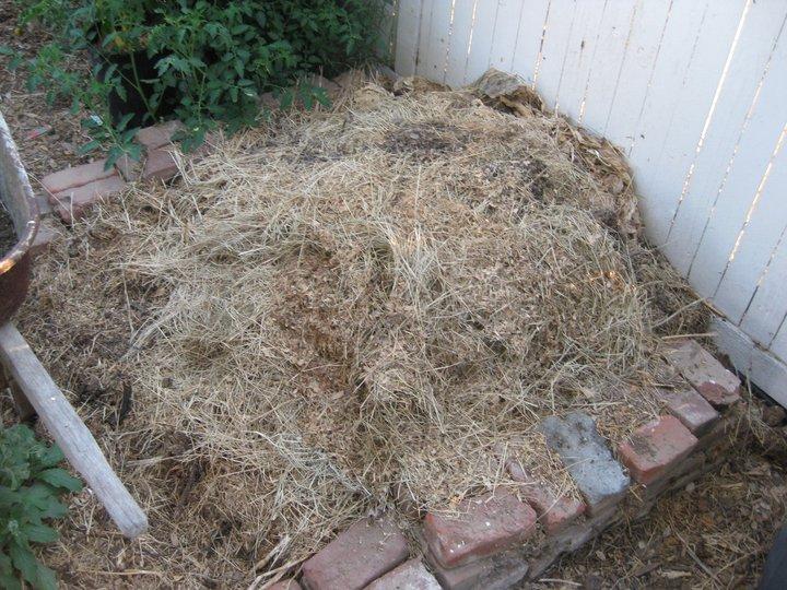Compost bin for kitchen