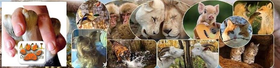 AACLI Associazione Animalista