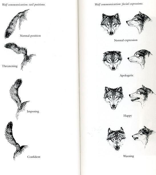 Dog Ear Positions