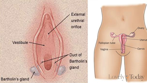 Penyakit Vagina