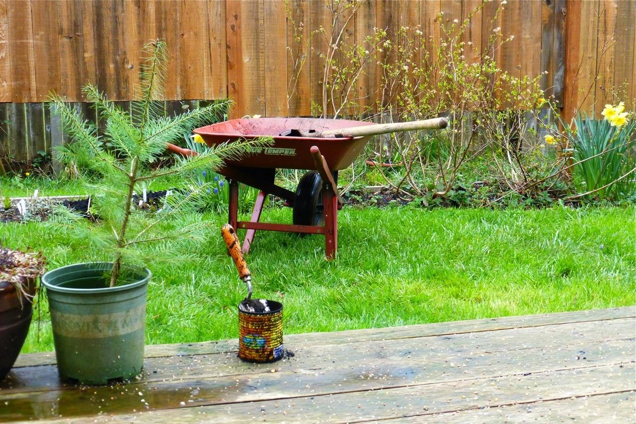 spring garden, garden, spring rain, wheelbarrow