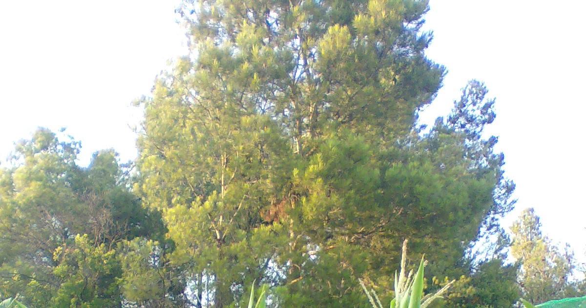 Aventuras en la palma d ebre asociaciones de cultivos Asociaciones de cultivos favorables