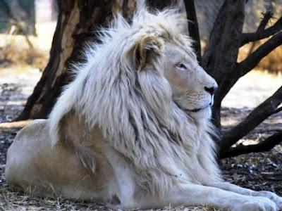 FOTOS INCREIBLES DE ANIMALES ASOMBROSOS