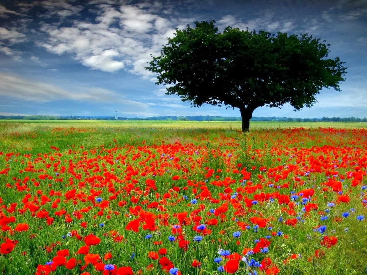 Remembrance day hd wallpapers photos or pics hd wallpapers blog - Poppy wallpaper ...
