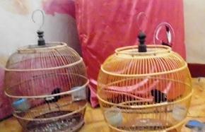 Hendak Jual Burung, Residivis Spesialis Pencurian Burung Ditangkap
