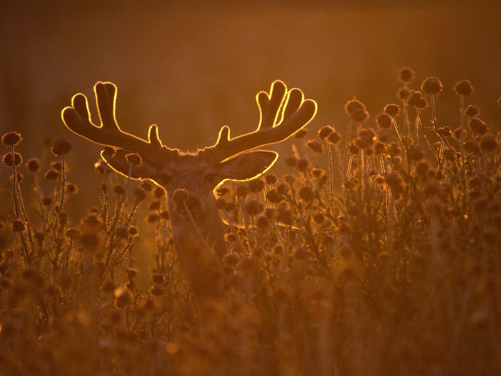 http://2.bp.blogspot.com/-LG1Nr8Ut-_E/TnDBcgE53CI/AAAAAAAAAKQ/QCyYmdDW1KU/s1600/deer-wallpaper-24-700970.jpg
