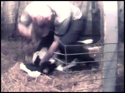 rogol, ayah rogol anak, koleksi video dera binatang, kari ngeri