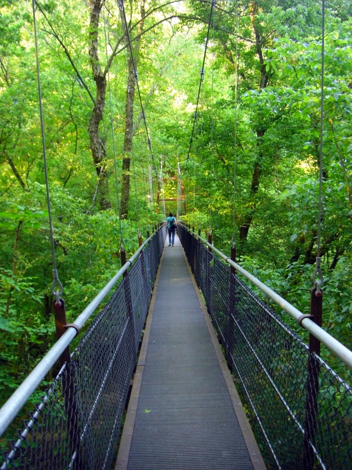 Jeff 39 s daily picture suspension bridge for Lull water