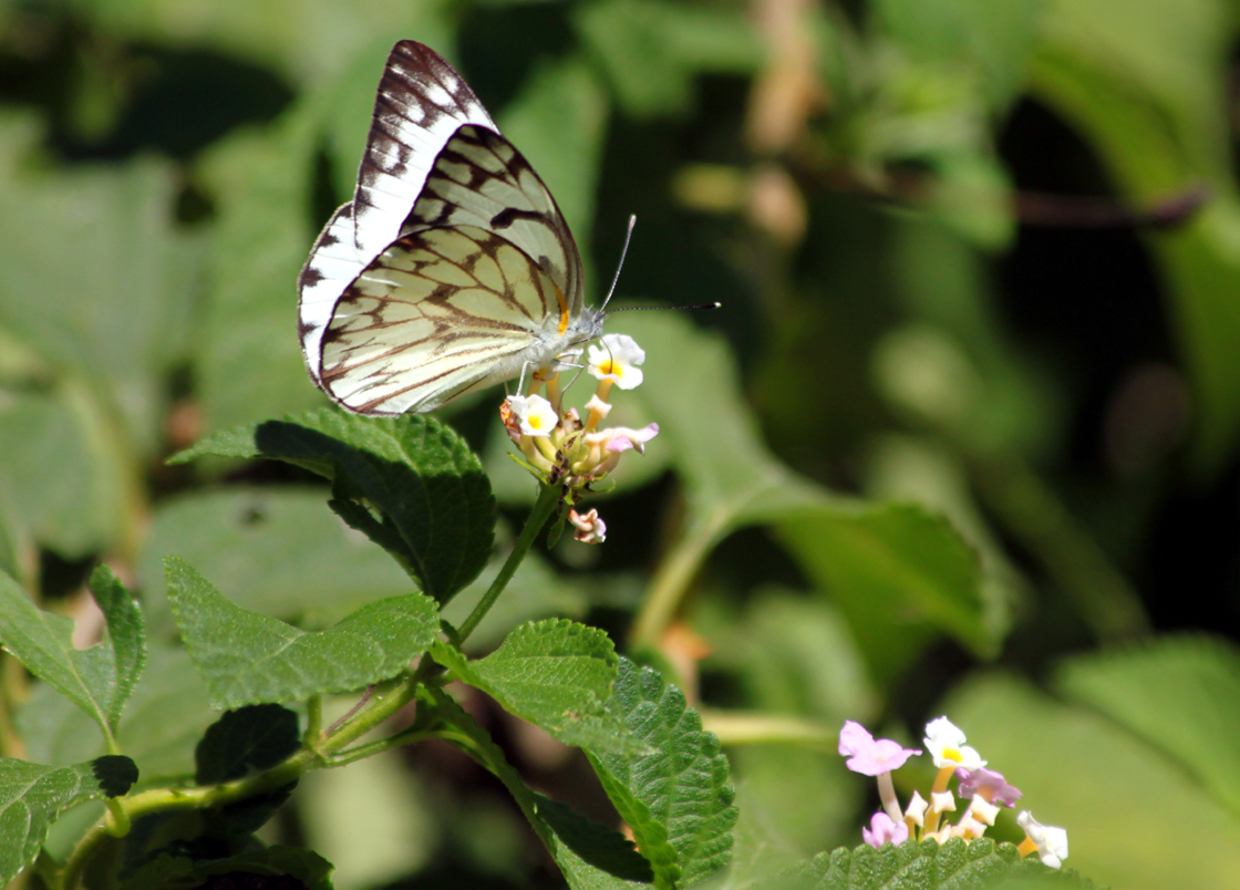 travelswithkathleen: The butterfly effect