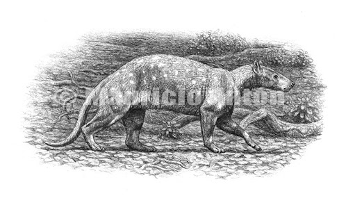 Condylarthra Pleuraspidotherium