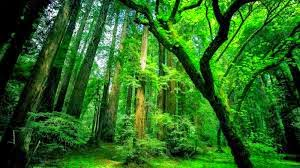 Trees and their importance