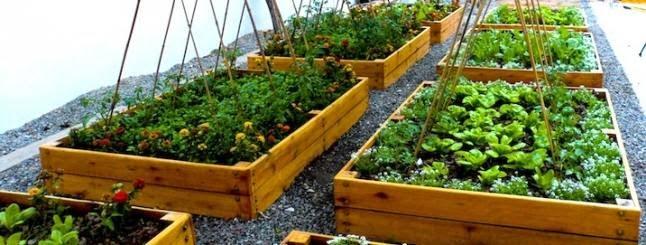 jardins-toits-naturels