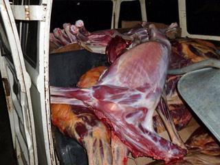 PM apreende mais de uma tonelada de carne de jumento em Pernambuco