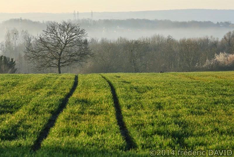 campagne champ arbre brume matin Essonne